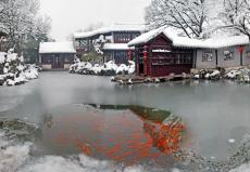 Snow and Ice Red Carp